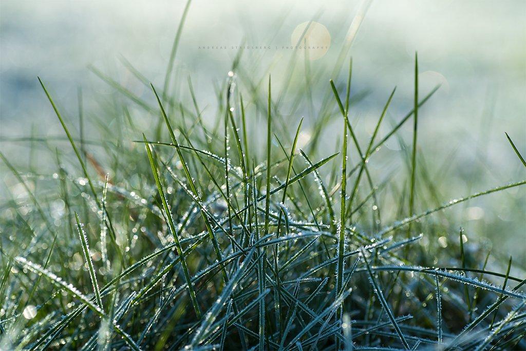 Frost-171104-025.jpg