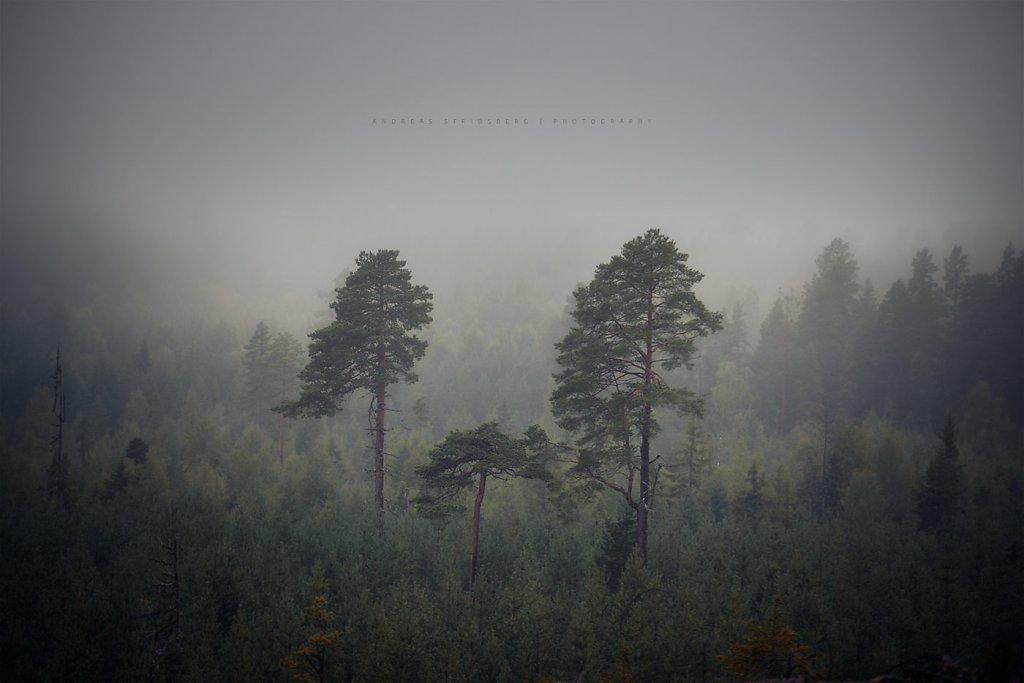 Nature-200803-007.jpg
