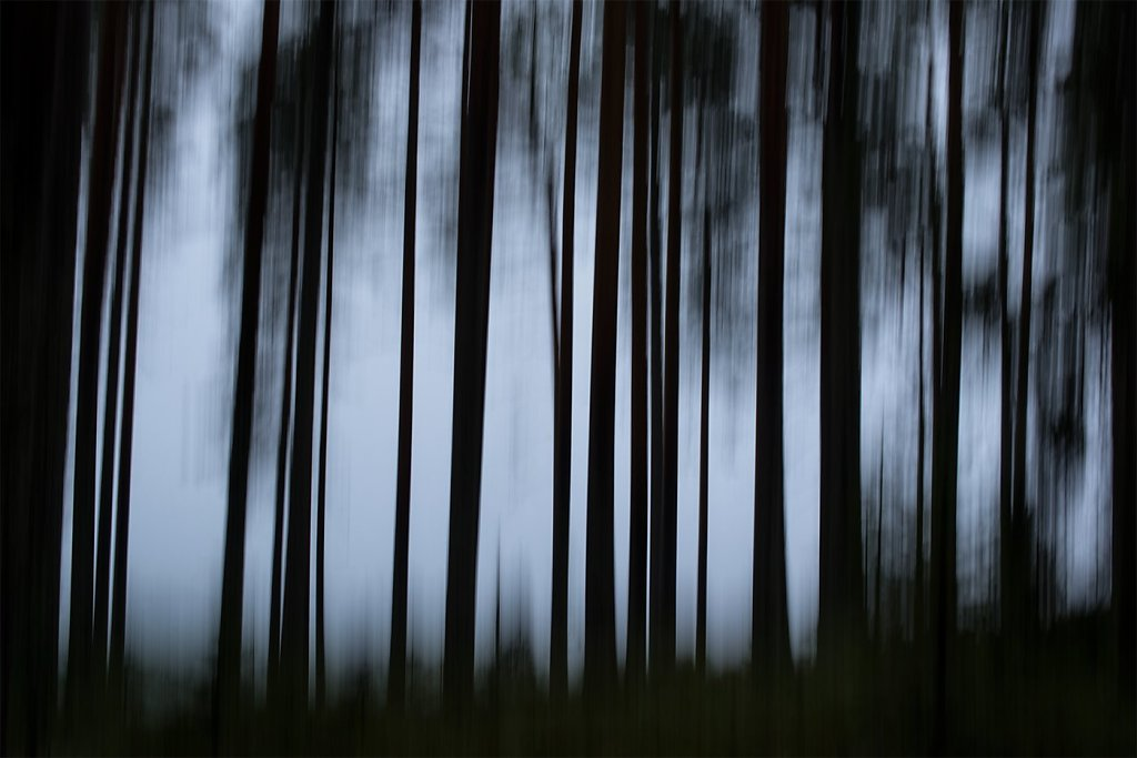 Nature-200803-015.jpg
