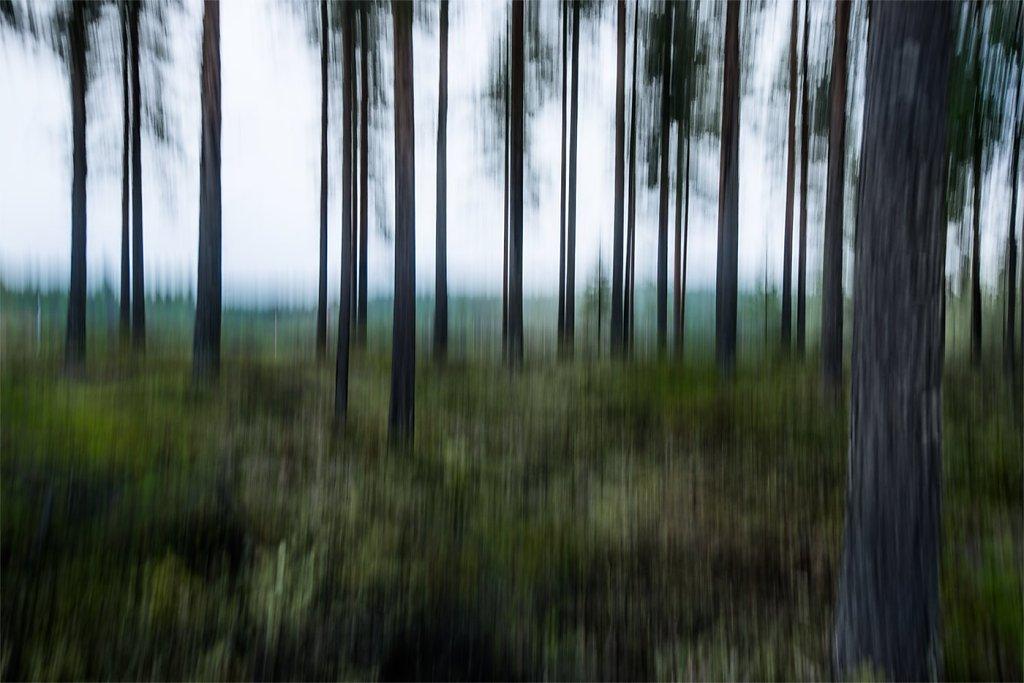 Nature-200803-046.jpg