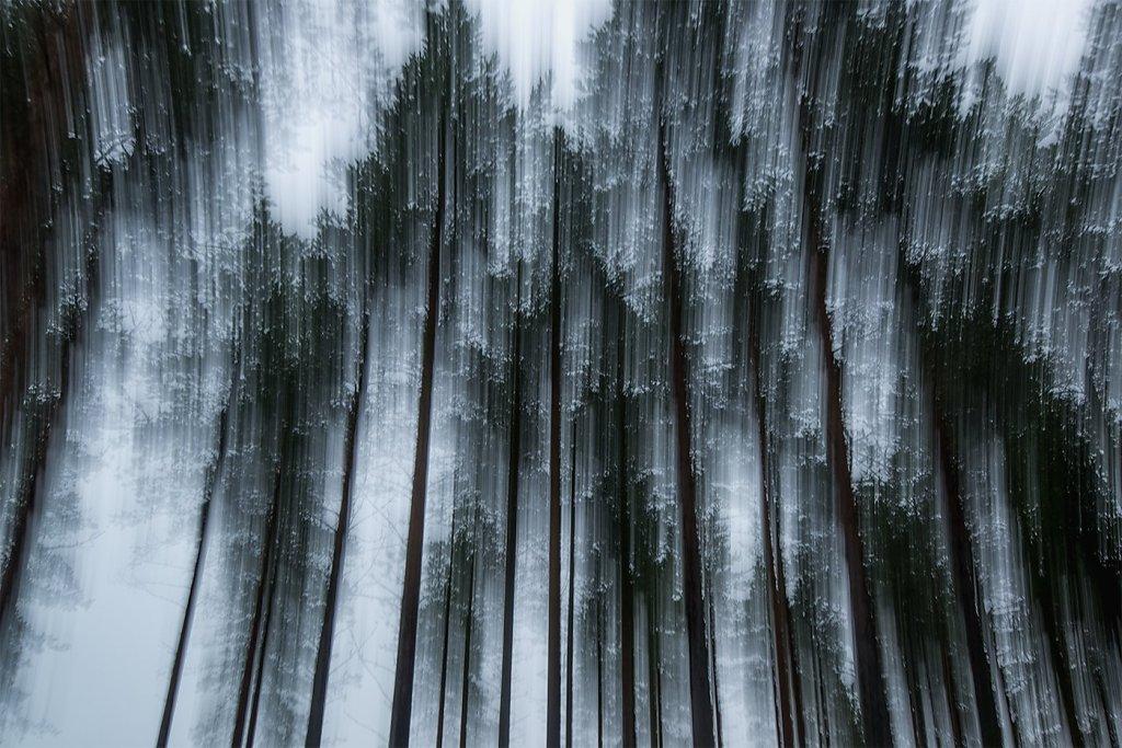 Nature-200803-056.jpg