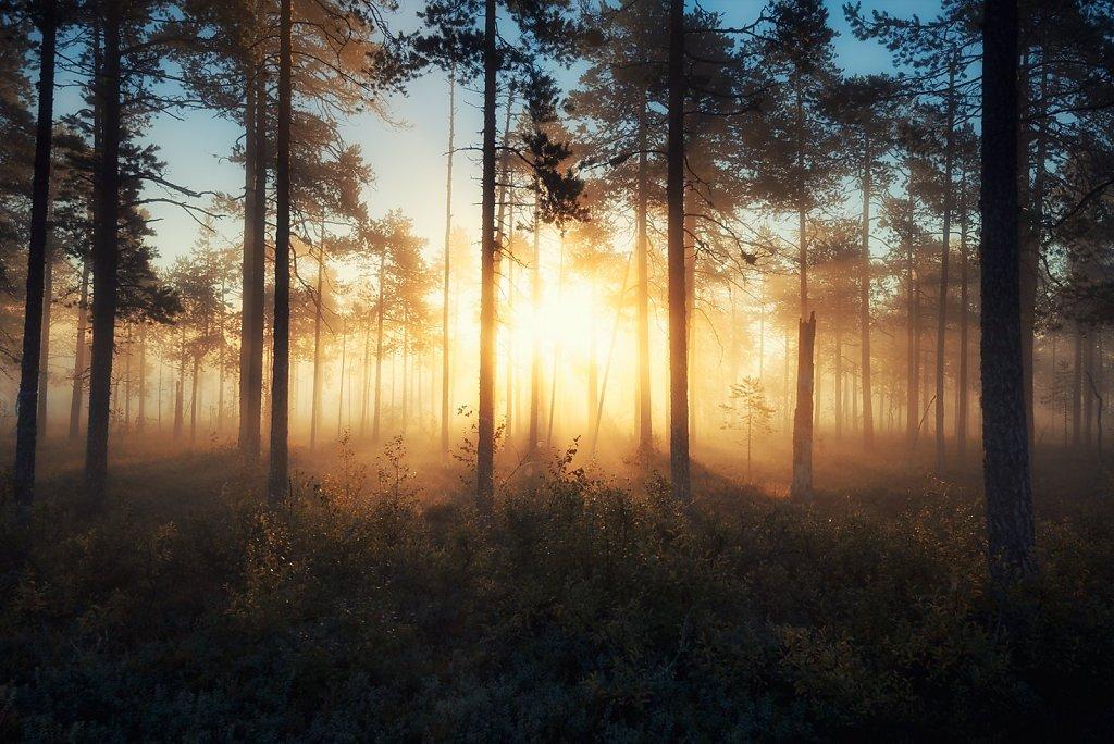 Nature-200902-124.jpg