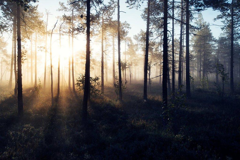 Nature-200902-168.jpg